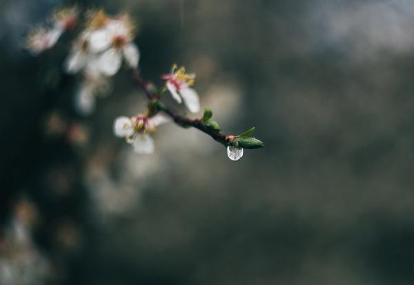 fruehling bluetenpflanzen nah