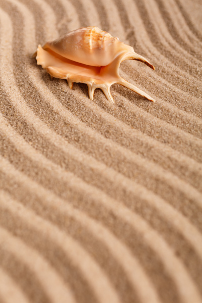 summer, time, concept, with, seashells, on - 28653100