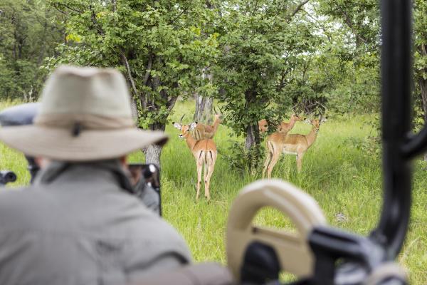 ein safari guide mit blick auf