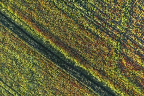 drohnenansicht des mohnfeldes im fruehjahr