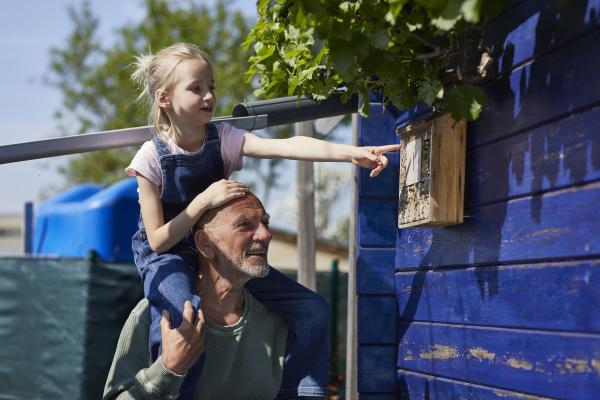 grossvater und enkelin inspizieren bienenhotel im