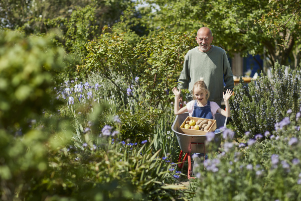 grandfather, with, granddaughter, in, wheelbarrow, in - 28755681