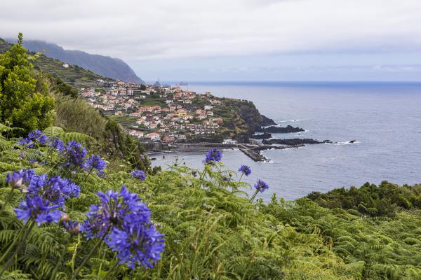 portugal, , porto, moniz, , purple - 28765067
