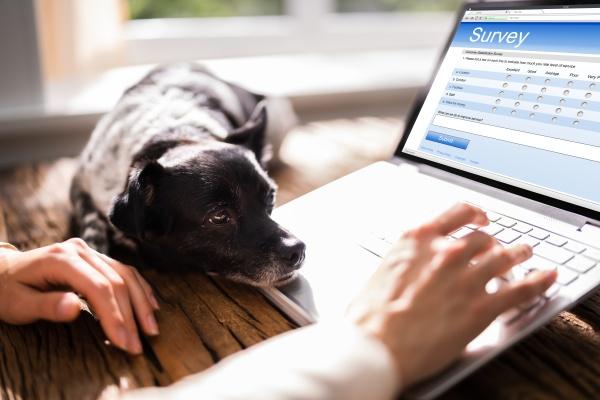 online business survey feedback formular oder