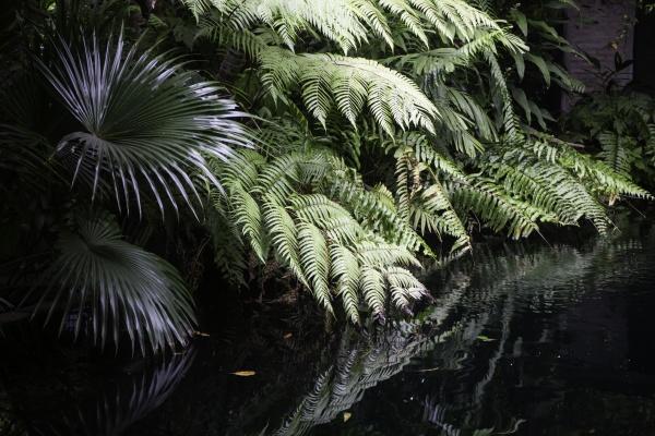 gruene pflanzen fuehlen sich frisch an