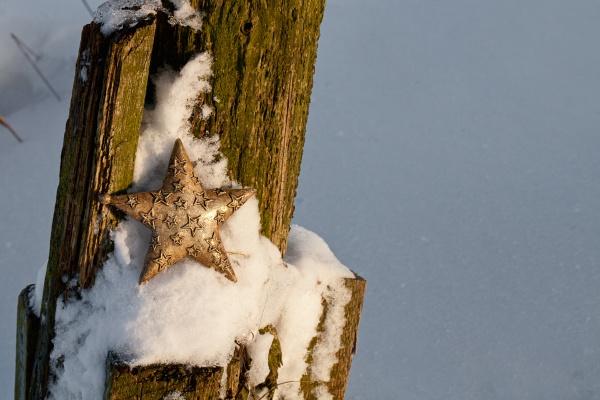 goldener weihnachtssternschmuck im schnee