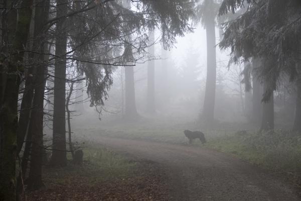 deutschland hessen hund auf waldweg im