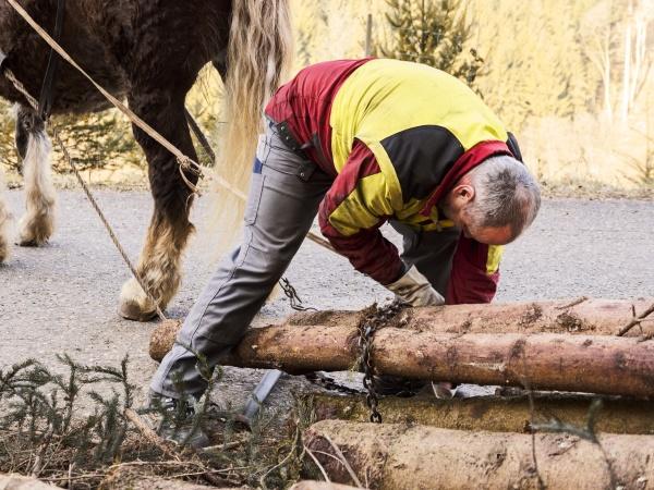 deutschland muehlenbach holzfaeller zur befestigung von