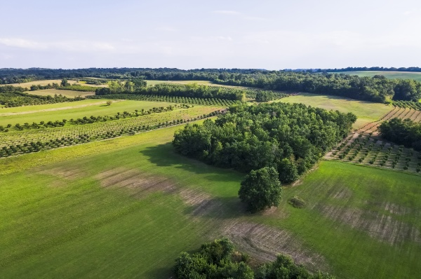 drohnenansicht der gruenen landschaft im sommer
