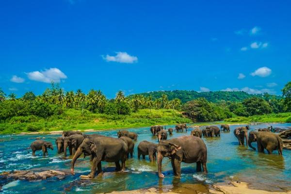 wildes elefantenbild sri lanka pinnawara