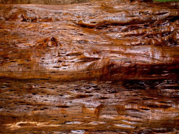 braune holz textur abstrakter hintergrund leere