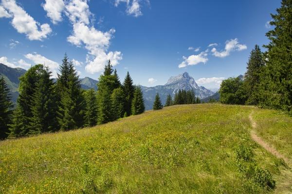 berg und waldpanorama im nationalpark gesaeuse
