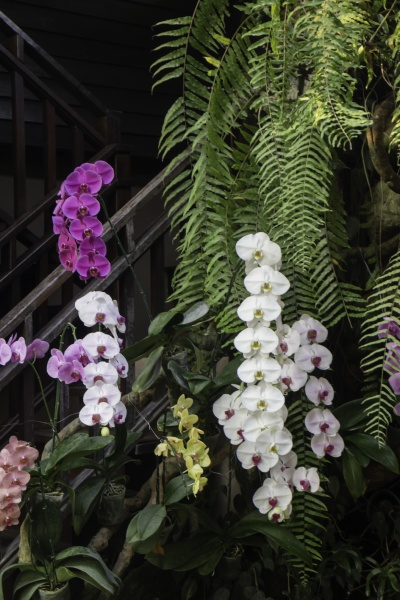 zierpflanze im garten