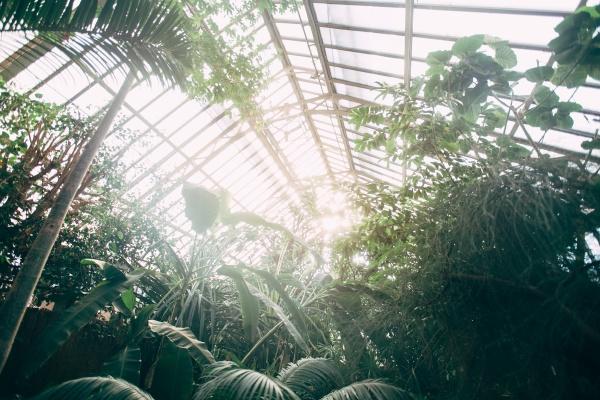 gewaechshaus mit tropischen pflanzen bananenbaum monstera