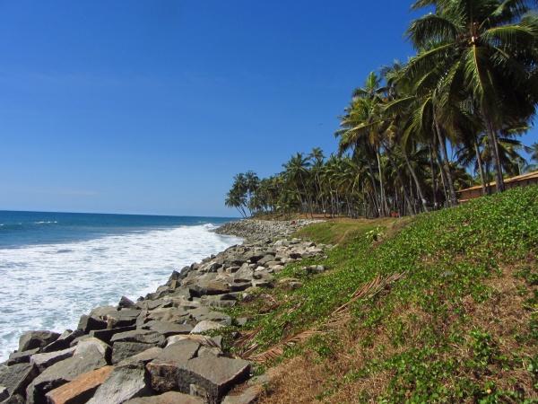 palmen und der strand in kerala