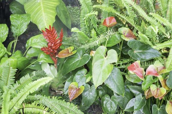 varieties, tropical, rainforest, foliage, plants - 29743444