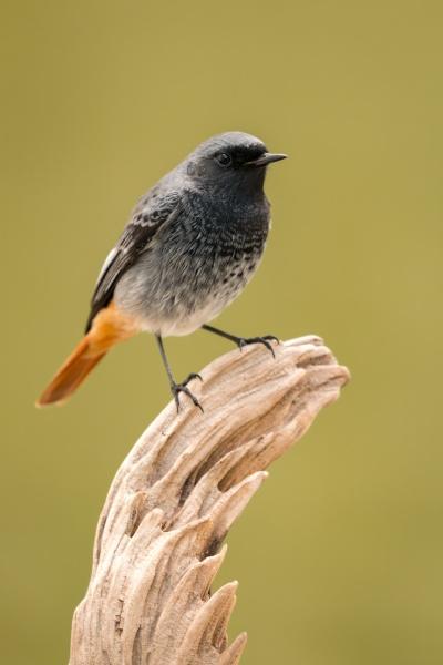 kleiner, vogel, auf, einem, stamm - 29778916
