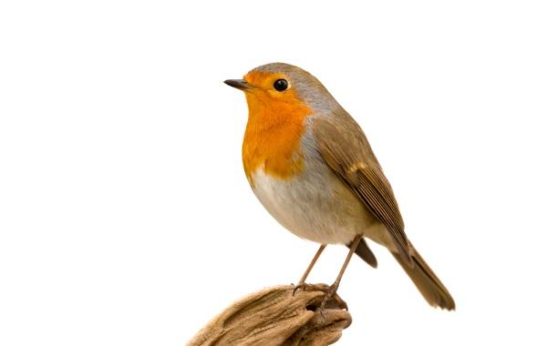 beautiful, small, bird - 29783856