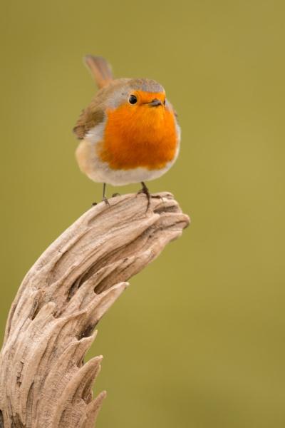 hübscher, vogel, mit, einem, schönen, orangeroten - 29783857