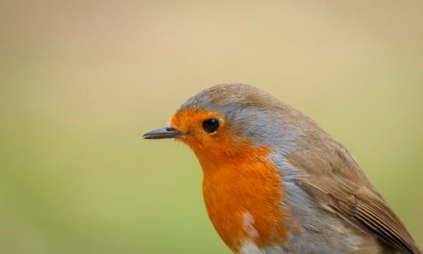 pretty, bird, with, a, nice, orange - 29783847