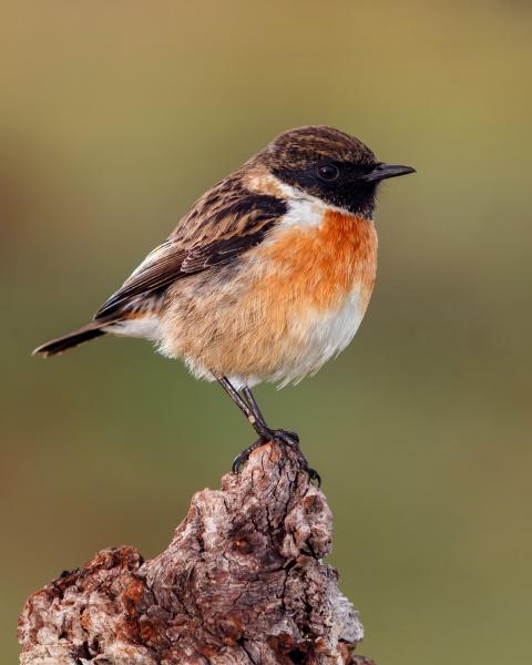 small, bird, on, a, slim, branch - 29784684