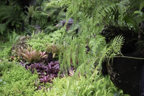 tropical, green, surroundings, in, outdoor, garden - 29915584