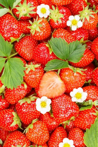 erdbeeren beeren fruechte erdbeerbeere frucht mit