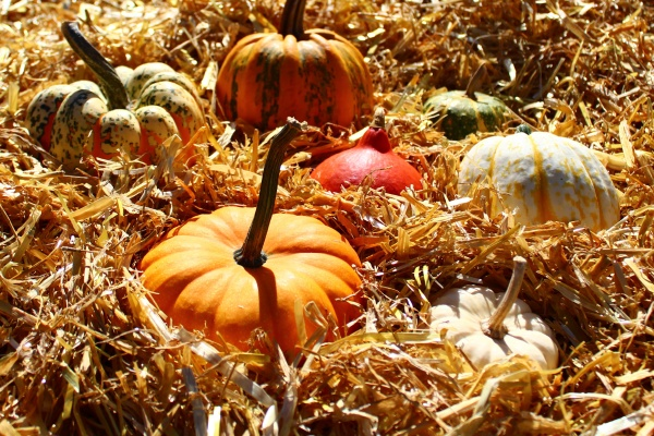 herbst herbstdekoration landleben kuerbis halloween halloween