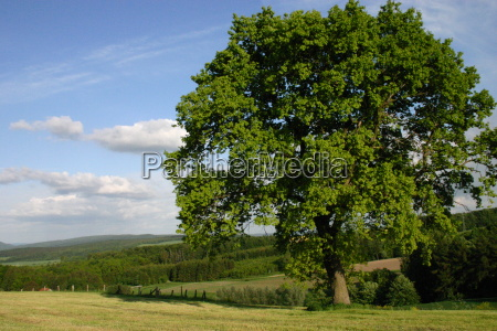 landscape with beech