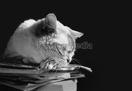 arbeitsalltag einer katze