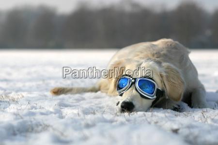 sonnenbad, im, winter - 214334