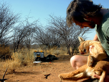 caracal trapped