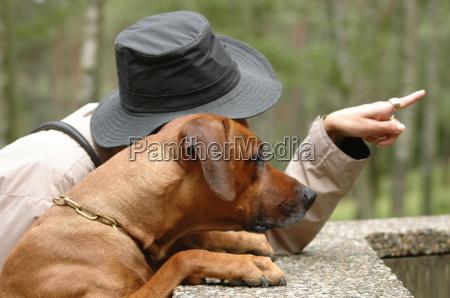 hundeverstaendnis