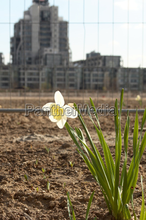 spring at construction site