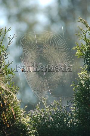 sonnenspieglung im spinnennetz 1