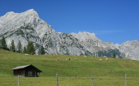 guats gras auf der bergwiesn