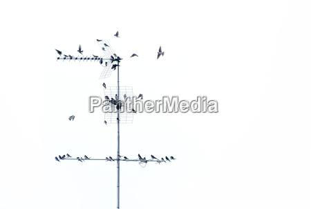 vogelschwarm 01