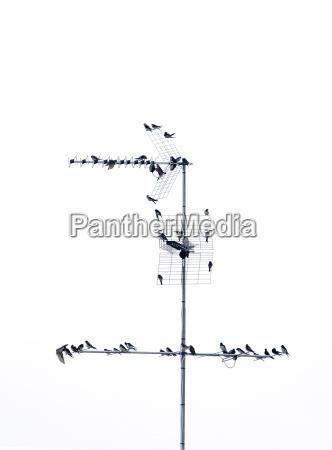 vogelschwarm 02