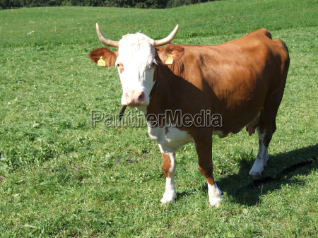 animal green brown brownish brunette horn