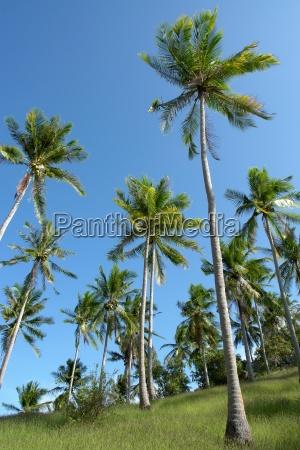 palmenhain auf koh tao thailand