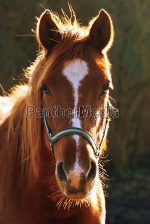ride horse pet mammal portrait eyes