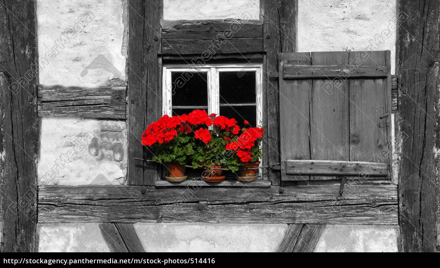 blumenfenster - 514416