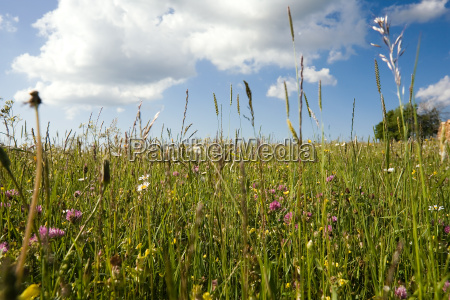 spring meadow with grasses