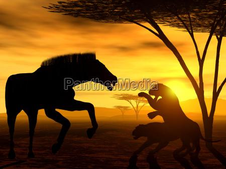 african spirit viii the fight