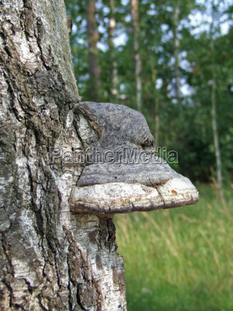 the mushroom on the tree