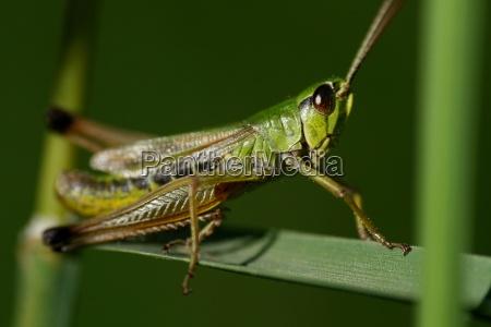 geniale insekten