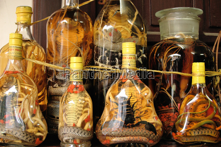 toxic animals in glass bottles