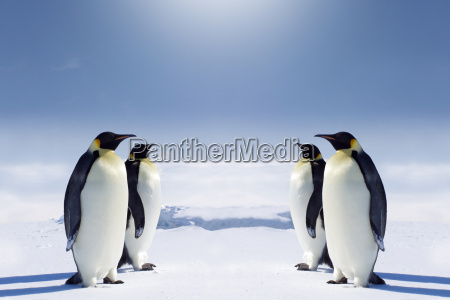 at the south pole