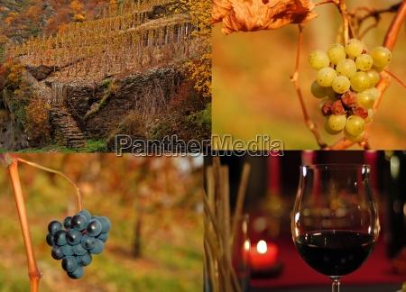 in vino veritas est