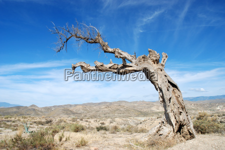 parched tree in the desert